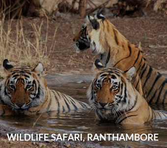 wildlife_safari_ranthambore