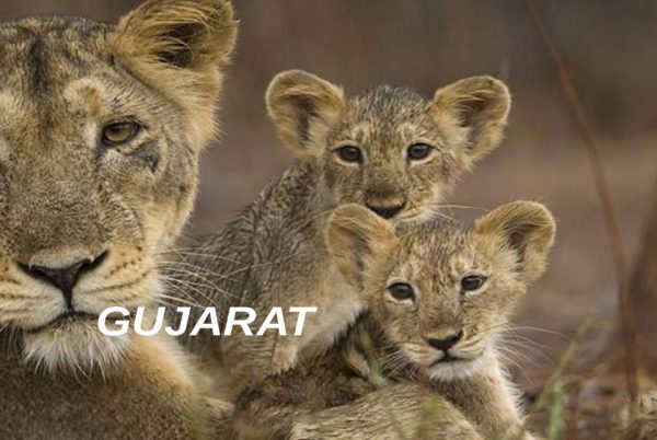 gujarat_wildlife